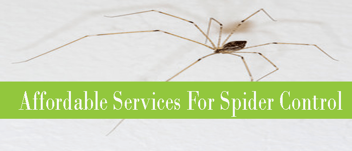 Affordable Services For Spider Control