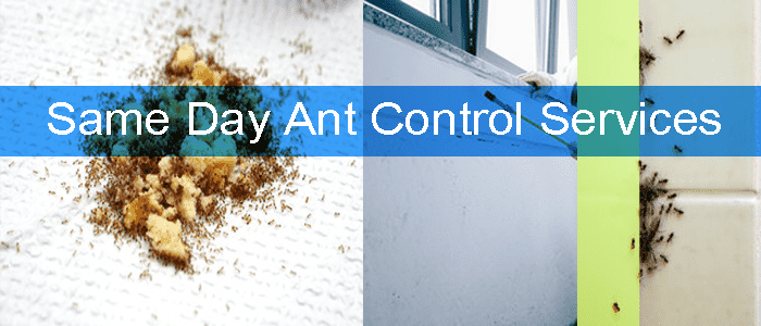 Same Day Ant Control Services